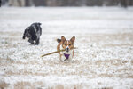 Freya carries a stick back to her owner, Ally Graziani of Pittsburgh, Pennsylvania, while playing fetch at Ritter Park after a winter storm on Monday, Feb. 15, 2021, in Huntington, W.Va. (Ryan Fischer/The Herald-Dispatch via AP)