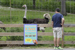 A visitor to the Franklin Park Zoo stands near a safe distancing sign while visiting an exhibit featuring a male ostrich named