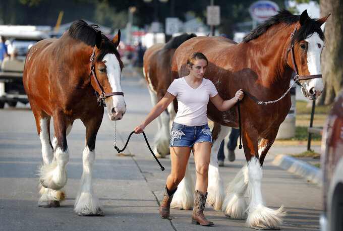 FILE - In this Aug. 16, 2018 file photo, Joyce Miller, of Shipshewana, Ind., walks her Clydesdale horses to the barn at the Iowa State Fair, in Des Moines, Iowa. With coronavirus cases rising throughout Iowa and around the nation, health experts are becoming increasingly worried about next month's Iowa State Fair, which will bring more than 1 million people to Des Moines. (AP Photo/Charlie Neibergall File)
