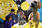 In this Tuesday, March 12, 2019 photo students from the Theodore Alexander Science Center School check an interactive display of the internal organs of different dogs at the California Science Center in Los Angeles. A new exhibit at the Los Angeles museum examines the relationship between dogs and humans and explores why the two species seem to think so much alike and get along so well.