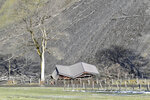 A mud flow damaged a hut a near Dorfgastein, Austrian province of Salzburg, on Monday, Nov. 18, 2019. The extreme snow and rainfalls of the past few days cause massive dangers and disabilities in parts of Austria,(AP Photo/Kerstin Joensson)