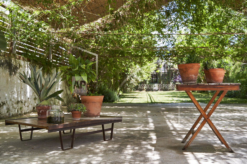 Potted plants kept on table at backyard