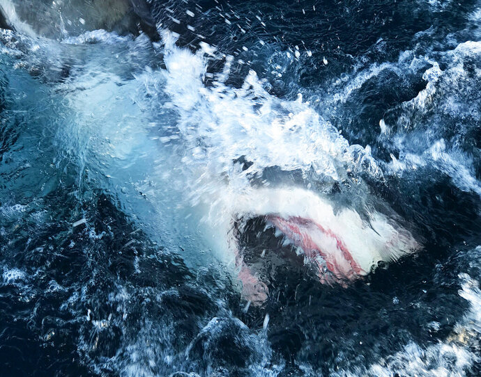 This image released by Discovery Channel shows a shark breaking through the water in a scene from