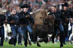 Handlers guide Ralphie, the Colorado mascot, across the field on the bison's ceremonial run before an NCAA college football game against Colorado State, Friday, Aug. 30, 2019, in Denver. (AP Photo/David Zalubowski)