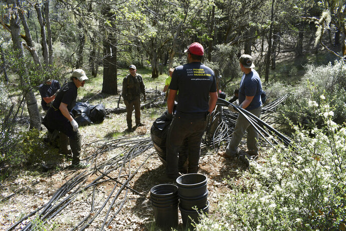 In this May 7, 2019, photo released by Cannabis Removal on Public Lands (CROP) Project, a group including U.S. Forest Service rangers, scientists and conservationists work to reclaim a so-called trespass grow site where nearly 9,000 cannabis plants were illegally cultivated. Authorities allege members of an international drug trafficking ring set up camp at the site months earlier. (Jackee Riccio/CROP via AP)