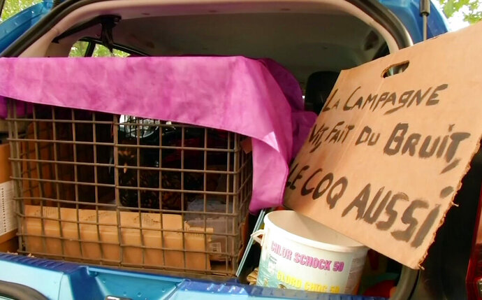 In this image made from video provided by BFMTV, a rooster is seen in a cage, with a sign reading in French