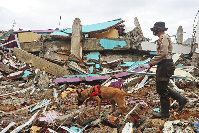 A police officer leads a sniffer dog during a search of victims at the ruin of a building flattened by an earthquake in Mamuju, West Sulawesi, Indonesia, Sunday, Jan. 17, 2021. Rescuers retrieved more bodies from the rubble of homes and buildings toppled by the magnitude 6.2 earthquake while military engineers managed to reopen ruptured roads to clear access for relief goods. (AP Photo/Joshua Marunduh)