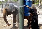 Elephant keeper Monica Uhl cools off