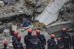 Rescue workers use Pasha, a sniffer dog, as they search for survivors in the rubble of an eight-story building which collapsed two days earlier in Istanbul, Friday, Feb. 8, 2019. Turkish rescue workers on Friday pulled out a 16-year-old boy from the rubble of an eight-story apartment building in Istanbul two days after it collapsed, Turkey's interior minister Suleyman Soylu said. (AP Photo/Emrah Gurel)