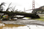 A fallen tree that was knocked down by recent severe weather lies in the Horseshoe Bay parking lot in front of the Golden Gate Bridge in Sausalito, Calif., Thursday, Feb. 14, 2019. Waves of heavy rain pounded California on Thursday, filling normally dry creeks and rivers with muddy torrents, flooding roadways and forcing residents to flee their homes in communities scorched by wildfires. (AP Photo/Michael Short)