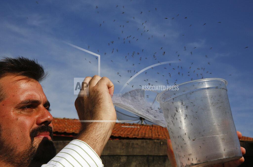 Brazil Zika Mosquito Eradication