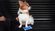 HZ UK Pet Passports