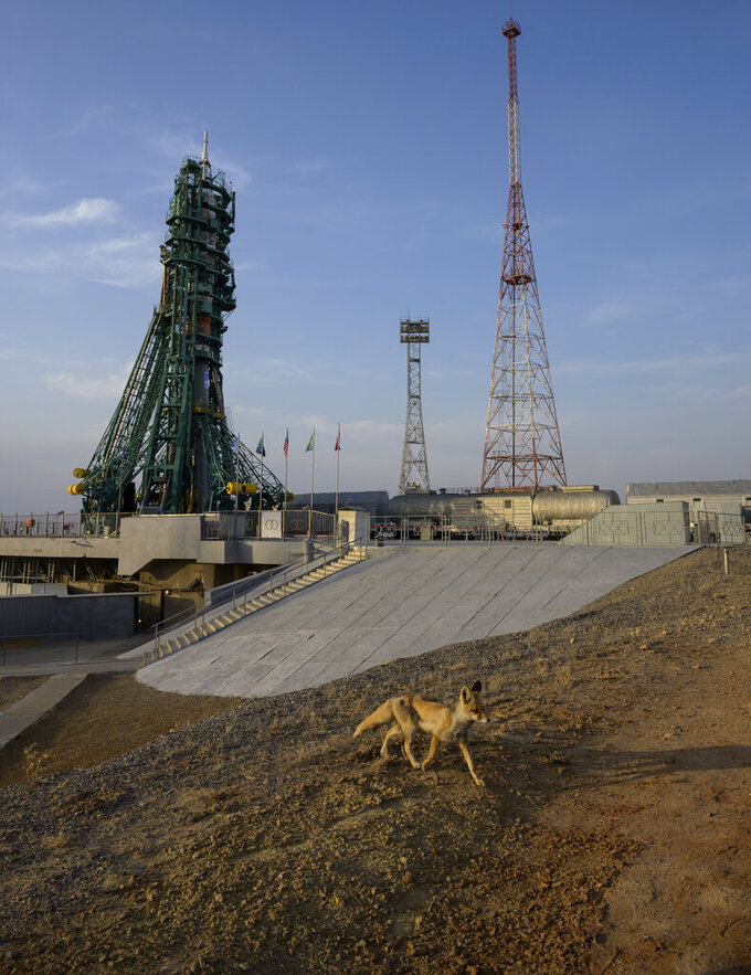 In this image provided by NASA, a fox walks around the Soyuz rocket launch pad at the Baikonur Cosmodrome launch pad, Thursday, April 8, 2021 in Kazakhstan. Astronaut Mark Vande Hei and cosmonauts Pyotr Dubrov and Oleg Novitskiy are scheduled to launch aboard the Soyuz MS-18 spacecraft Friday, to rendezvous with the International Space Station. (Bill Ingalls/NASA via AP)
