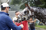 In this image provided by EQUI-PHOTO,  Hot Rod Charlie, gets a soapy bath from groom Eddie Barron as he is held by Tyler Cerin, left, after a morning gallop on the track at Monmouth Park Racetrack in Oceanport, N.J., Wednesday morning July 14, 2021. Hot Rod Charlie is the morning line favorite for Saturday's Haskell Stakes horse race. (Bill Denver/EQUI-PHOTO via AP)