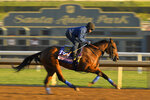 Bast, entered in the Juvenile Fillies horse race, works out on the track at Santa Anita Park for the Breeders' Cup, Thursday, Oct. 31, 2019, in Arcadia, Calif. (AP Photo/Mark J. Terrill)