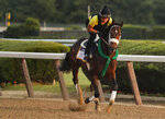 Belmont Stakes hopeful Bravazo works out on the main track at Belmont Park, Friday, June 8, 2018, in Elmont, N.Y. Bravazo is one of 10 horses racing in the 150th running of the Belmont Stakes horse race on Saturday. (AP Photo/Julie Jacobson)