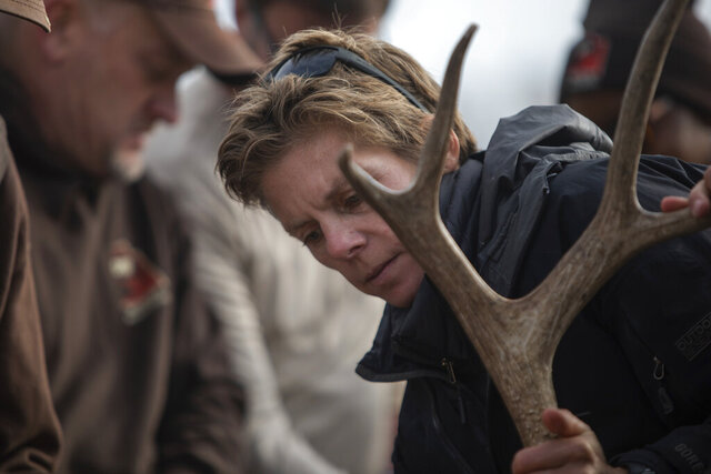 In this Monday, Nov. 18, 2019 photo, biologist with the Utah Division of Natural Resources rounded up mule deer in Antelope Island, Utah, to check their health and affix GPS collars on them. The deer were caught with a net gun and airlifted by helicopter to Fielding Garr Ranch. (Ben Dorger/Standard-Examiner via AP)