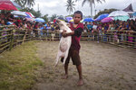 In this Saturday, Oct. 26, 2019 photo, ten years old Jomuk Nainggolan poses with a prize pig he won in a pig wrangling competition during Toba Pig and Pork Festival, in Muara, North Sumatra, Indonesia. Christian residents in Muslim-majority Indonesia's remote Lake Toba region have launched a new festival celebrating pigs that they say is a response to efforts to promote halal tourism in the area. The festival features competitions in barbecuing, pig calling and pig catching as well as live music and other entertainment that organizers say are parts of the culture of the community that lives in the area. (AP Photo/Binsar Bakkara)