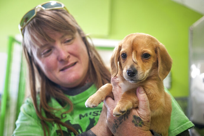 Mac's Mission animal rescue founder Rochelle Steffen holds a 10-week-old golden retriever puppy with a small tail growing between his eyes, dubbed
