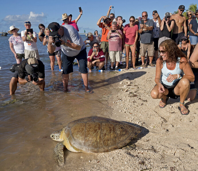 In this photo provided by the Florida Keys News Bureau, Bette Zirkelbach, right, manager of the Florida Keys-based Turtle Hospital, and spectators watch as
