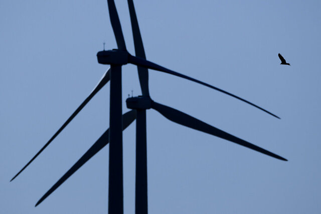 FILE - In this March 29, 2020, file photo, a bird flies among wind turbines near King City, Mo. The Trump administration is moving to scale back criminal enforcement of a century-old law protecting most American wild bird species. The former director of the U.S. Fish and Wildlife Service told AP billions of birds could die if the government doesn't hold companies liable for accidental bird deaths. (AP Photo/Charlie Riedel, File)