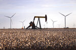 FILE - In this Oct. 18, 2015, file photo, pump jacks and wind turbines are visible inside of a cotton field near Lamesa, Texas. A California-based renewable energy developer plans to increase by seven-fold its investments as it prepares to build more wind farms in the heart of New Mexico over the next several years. An analysis commissioned by Pattern Development shows a $1.2 billion economic impact from its wind farms in eastern New Mexico and West Texas, surpassing initial projections. (Edyta Blaszczyk/Odessa American via AP, File)