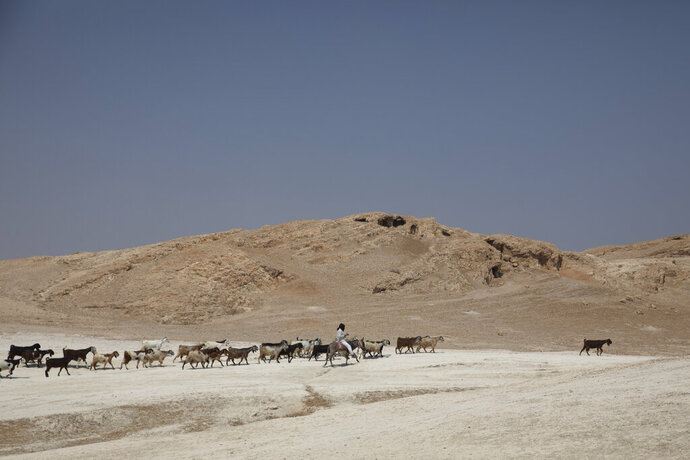 In this Monday, June 29, 2020 photo, a shepherd tends to his flock of sheep in the Jordan Valley, West Bank. The U.N.'s human rights chief Michelle Bachelet said that Israel's plan to begin annexing parts of the occupied West Bank would have