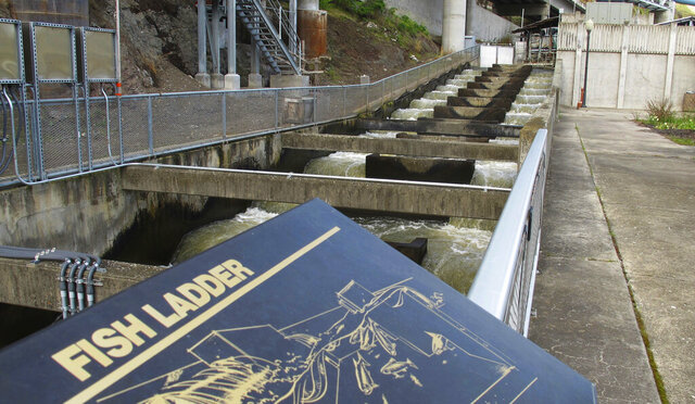 FILE - In this April 11, 2018, file photo, water flows through a fish ladder designed to help migrating fish swim through the Lower Granite Dam on the Snake River near Almota, Wash. An Environmental Protection Agency report provides details about how federal government dams in the Snake and Columbia river system raise summer water temperatures, hurting endangered salmon runs. The report made public Tuesday, May 19, 2020 said dams on both rivers play a role in raising water temperatures above 68 degrees Fahrenheit, which is the point at which the water becomes harmful to salmon and steelhead. (AP Photo/Nicholas K. Geranios, File)