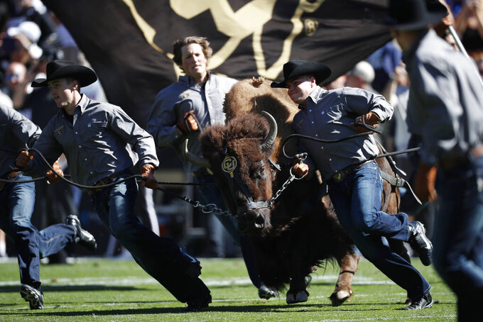 Handlers guide Colorado mascot Ralphie on the bison's ceremonial run before the first half of an NCAA college football game against Air Force, Saturday, Sept. 14, 2019, in Boulder, Colo. (AP Photo/David Zalubowski)