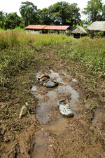 Shoes are abandoned on a mud puddle outside the improvised temple where a pregnant woman, five of her children and a neighbor were killed in a religious ritual in a jungle community in El Terron, Panama, Friday, Jan. 17, 2020. The indigenous residents were rounded up by about 10 lay preachers on Monday and tortured, beaten, burned and hacked with machetes to make them