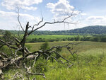 A fallen tree lies in a section of the Stones River Bend Regional Park where the Southern Grasslands Initiative is preparing to restore native grasslands in Nashville, Tenn., on June 2, 2020. The area was originally part of vast patchwork of Southern grasslands that hang on today only in tiny remnants. (AP Photo/Travis Loller)