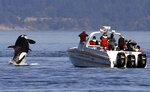 FILE - In this July 31, 2015 file photo, an orca leaps out of the water near a whale watching boat in the Salish Sea in the San Juan Islands, Wash. Habitat protections for an endangered population of orcas would be greatly expanded under a proposal to be advanced by NOAA Wednesday, Sept. 18, 2019. (AP Photo/Elaine Thompson, File)