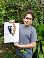 In this Aug. 2020 photo provided by Johana Reyes Herrera, Jacobo Rendon, 14, poses with his illustration of an Acorn Woodpecker in his backyard in El Camino de Viboral, Colombia. Rendon has been working on a photographic and illustrated bird guide that he plans to donate to a local cultural center. (Johana Reyes Herrera via AP)