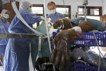 CAPTION CORRECTS TYPE OF SURGERY - In this photo taken on Sunday, March 17, 2019, volunteer orthopedic surgeon Andreas Messikommer of Switzerland, top center, conducts a surgery on a female orangutan named 'Hope' for infections in some parts of the body and to fix broken bones, at Sumatra Orangutan Conservation Programme (SOCP) facility in Sibolangit, North Sumatra, Indonesia. A veterinarian says the endangered orangutan that had a young baby has gone blind after being shot at least 74 times, including six in the eyes, with air gun. The baby orangutan died from malnutrition last Friday as rescuers rushed the two to the facility. (AP Photo/Binsar Bakkara)