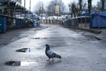 A pigeon at a closed street market in Ivano-Frankivsk, Western Ukraine, Friday, Jan. 8, 2021. Ukraine imposes a wide-ranging lockdown beginning Friday, closing schools and entertainment venues and restaurant table service through Jan. 25. (AP Photo/Evgeniy Maloletka)