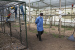 In this Aug. 5 , 2019 photo, a veterinarian walks past animals that were rescued from animal traffickers, in the rehabilitation area of a wildlife center in Bogota, Colombia. While the aim is always to return the animals to their natural habitat, many are unfit to survive in the wild, having developed diseases or grown too accustomed to human beings. (AP Photo/Ivan Valencia)