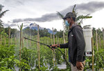 A man sprays insecticide at his crops as Mount Merapi is seen erupting int he background, in Sleman, Indonesia, Wednesday, Jan. 27, 2021. Indonesia's most active volcano erupted Wednesday with a river of lava and searing gas clouds flowing 1,500 meters (4,900 feet) down its slopes. (AP Photo/Slamet Riyadi)