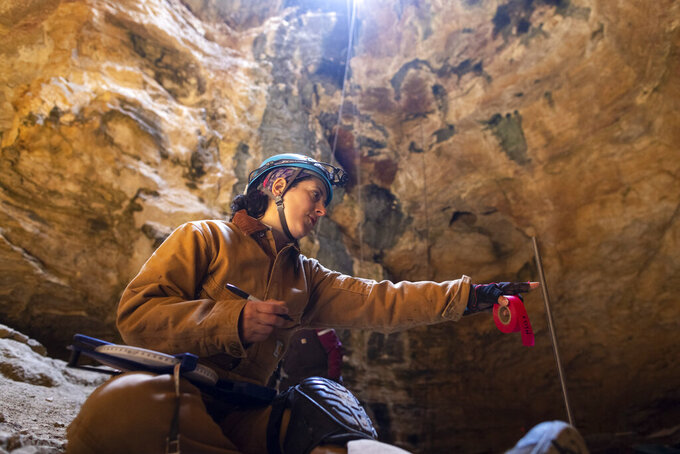 Des Moines University associate professor and vertebrate paleontologist Julie Meachen helps set up a grid that will allow scientists to document where fossils are found in northern Wyoming's Natural Trap Cave near Lovell, Wyo. on July 8, 2021. Thousands of animals have fallen into the cave and perished over the past 30,000 years, making the site a treasure trove for paleontologists. (Mike Clark/The Billings Gazette via AP)