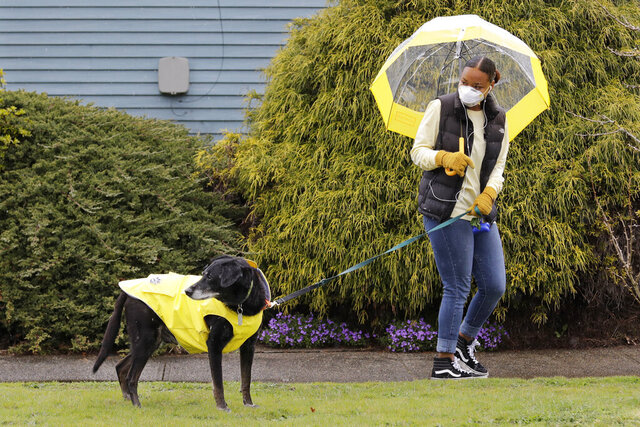 Dog walker Imaj Royster, wearing a protective mask against the coronavirus outbreak, looks back as her charge Hazard is distracted during a stroll in the rain Monday, March 30, 2020, in Seattle. (AP Photo/Elaine Thompson)