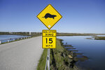 In this photo taken Monday, March 26, 2018, a sign warns motorists of sea otters at the Elkhorn Slough in Moss Landing, Calif. Along 300 miles of California coastline, including Elkhorn Slough, a wildlife-friendly pocket of tidal salt marsh and rich seagrass in the curve of Monterey Bay, southern sea otters under state and federal protection as a threatened species have rebounded from as few as 50 survivors in the 1930s to more than 3,000 today. (AP Photo/Eric Risberg)