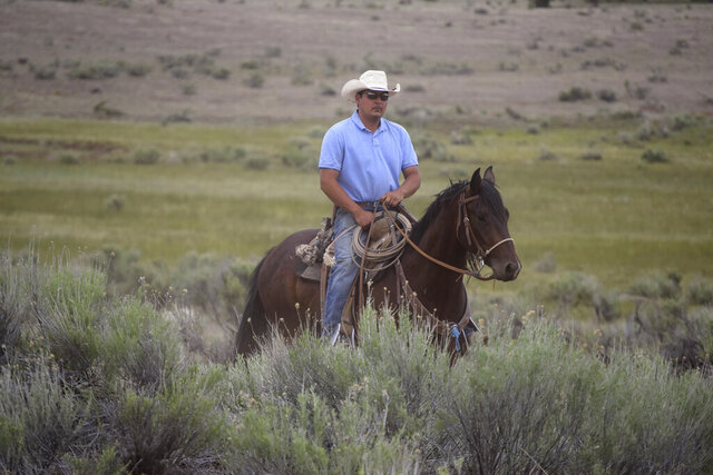 In this June 11, 2020, photo, Kevin Marquez, 28, from Bluewater, N.M., rides through a pasture on the Zuni Mountains in McGaffey, N.M. New Mexico cowboys say the challenges of ranching in the Zuni Mountains include predators, extreme weather and vandalism. One of his cows was shot and killed last year. (Vida Volkert/Gallup Independent via AP)