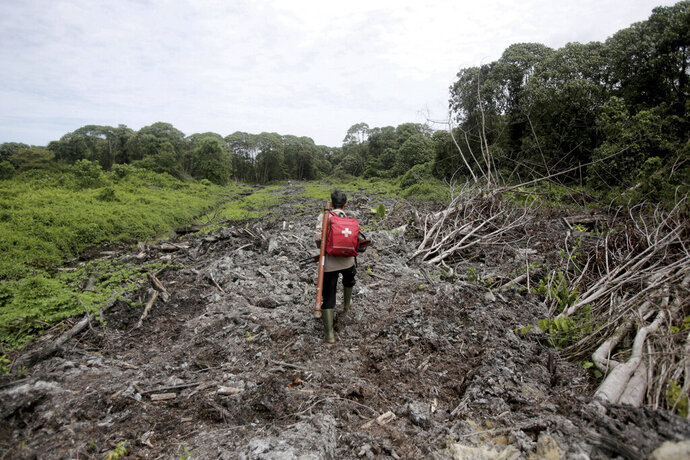 FILE - In this Aug. 10, 2017 file photo, Pandu Wibisono, a conservationist of Sumatran Orangutan Conservation Program (SOCP) carries a medical pack as he walks on a cleared forest during a rescue operation for orangutans reportedly trapped in its disrupted habitat near a palm oil plantation at Tripa peat swamp in Aceh province, Indonesia. Environmentalists say Indonesian plantation companies fined for burning huge areas of land in the area since 2009 have failed to pay hundreds of millions of dollars in penalties meant to hold them accountable for actions that took a devastating environmental and human toll. (AP Photo/Binsar Bakkara, File)