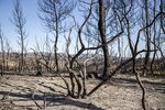 Burned trees remain after a fire in La Palma d'Ebre, Spain, Friday June 28, 2019. A major wildfire in northeastern Spain that began in a pile of chicken dung raged out of control for a third straight day Friday with more than 600 firefighters and six water-dropping aircraft battling the blaze in the Catalonia region. Spain is forecast to endure the peak of a recent heat wave, with temperatures expected to exceed 40 degrees Celsius (104 Fahrenheit). (AP Photo/Jordi Borras)