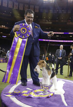 Gabriel Rangel poses for photographs with King, a wire fox terrier, after King won Best in Show at the 143rd Westminster Kennel Club Dog Show on Tuesday, Feb. 12, 2019, in New York. (AP Photo/Frank Franklin II)