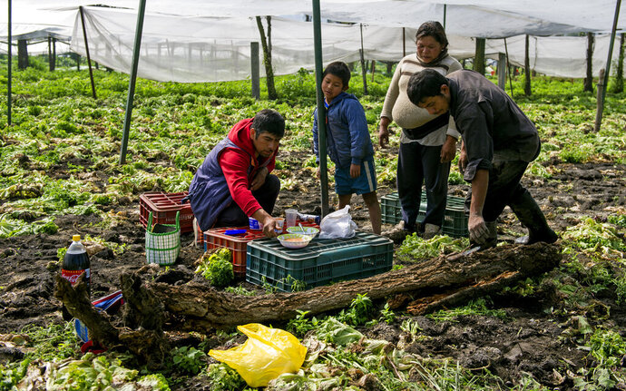 FILE - In this Aug. 19, 2016 file photo, lettuce farmer Edgar Serralde sets out lunch for his workers and their son, in Mexico City's borough Xochimilco.  On Friday, Nov. 22, 2019, Mexico's lower house of Congress approved for the 2020 federal budget, to giving money directly to farmers and poor families, rather than distributing funds through groups that claim to represent them. (AP Photo/Nick Wagner, File)