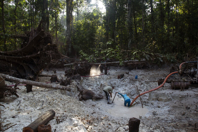 Men search for gold at an illegal gold mine in the Amazon jungle in the Itaituba area of Para state, Brazil, Friday, Aug. 21, 2020. It's part of a gold rush that started in 1984 after the precious metal was discovered in the region, where around 30 tons of gold worth some $1.1 billion are illegally traded in the state of Para annually, according to National Mining Agency estimates, or about six times more than the amount legally declared. (AP Photo/Lucas Dumphreys)
