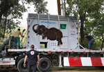 Pakistani wildlife workers and experts from the international animal welfare organization Four Paws, secure a crate carrying an elephant named Kaavan on a truck before transporting him to a sanctuary in Cambodia, at the Marghazar Zoo in Islamabad, Pakistan, Sunday, Nov. 29, 2020. Kavaan, the world's loneliest elephant, became a cause celebre in part because America's iconic singer and actress Cher joined the battle to save him from his desperate conditions at the zoo. (AP Photo/Anjum Naveed)