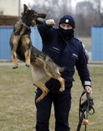 "Police officer Pawel Kuchnio in training with patrol dog Orbita, in Warsaw, Poland, on Friday, March 19, 2021. When they age, the dogs and horses that serve in Poland's police, Border Guard and other services cannot always count on a rewarding existence. Responding to calls from concerned servicemen, the Interior Ministry has proposed a bill that would give the animals an official status and retirement pension, hoping this gesture of ""ethical obligation"" will win unanimous backing. (AP Photo/Czarek Sokolowski)(AP Photo/Czarek Sokolowski)"