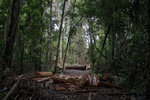 In this Nov. 22, 2019 photo, cut logs and wooden boards lie in an area opened by illegal loggers within the Renascer Reserve in the Amazon rainforest in Prainha, Para state, Brazil. This conservation unit is known to have trees with high economic value such as ipe, jatoba and massaranduba. One of the biggest seizures of illegal timber in the Brazilian Amazon forest happened in this reserve in 2010. (AP Photo/Leo Correa)