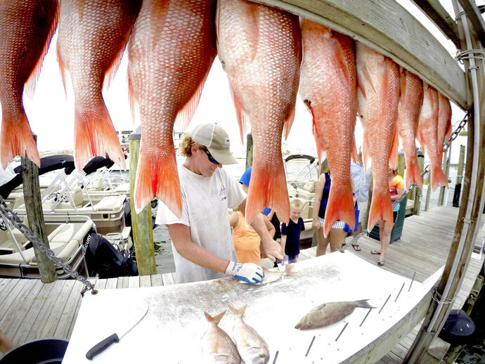 FILE - In a June 1, 2017 file photo, P.S. Ansley of the charter boat Cutting Edge, is framed by red snapper as he cleans fish on the Destin Harbor in Destin, Florida. The Department of Commerce on Wednesday, Feb. 5, 2020 approved a measure giving Gulf states the authority to manage private recreational red snapper fishing in federal waters as well as state waters. (Nick Tomecek/Northwest Florida Daily News via AP, File)